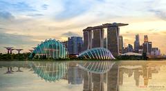 Singapore skyline at sunset (Dibrova) Tags: singapore skyline bay sunset skyscraper waterfront panorama financial reflection city twilight marina cityscape downtown highrise landmark evening gardens supertree tree travel dusk hotel modern building architecture asia