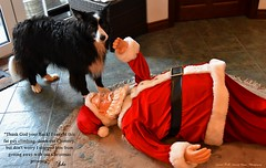Caught this fat guy climbing down our chimney (ashaconnie) Tags: father christmas santa claus funny picture border collie dog caption