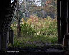 Light at the End (Photographybyjw) Tags: light end green sunny this shot an abandoned dairy barn found north carolina ©photographybyjw rural country foliage wood weathered