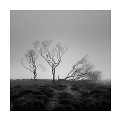 The Christmas Party (Nick green2012) Tags: square landscape blackandwhite fog tree minimal silence