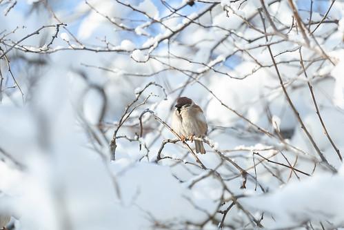 Sparrow ©  бґЂЙґбґ…КЏ ᴏɴᴇ