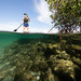 A visitor paddle-boards through the Jupiter Inlet Lighthouse Outstanding Natural Area