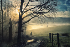 Morning walk (Rita Eberle-Wessner) Tags: landschaft landscape inversionswetterlage nebel fog bäume trees wald forest pferd horse hund dog reiter weg path feldweg weide meadow wiese zaun fence sonnenstrahlen sunrays sunbeams odenwald