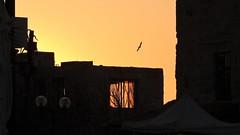 Old Jaffa (unicorn7unicorn) Tags: яффо дом окно птица закат wah 30 нфд