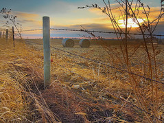 Two Bales (wdterp) Tags: field corn bales fence barbedwire post farm country landscape rural
