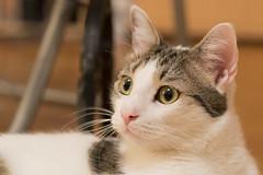 Max (DavidB1977) Tags: max cat chat katze nikon d610 85mm