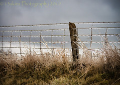 The Loneliness of the Cold (HFF) (13skies) Tags: fences fence frozen icy ice wireandpost cold drizzle rain countryroad countryside cleaverrd post happyfencefriday sonya99 lens winter grey greyskies grass water clouds hff friday background light