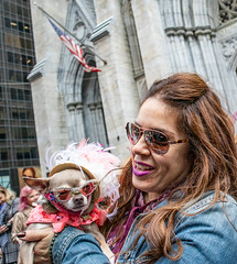 Dog with Cat's Eye Glasses (UrbanphotoZ) Tags: easterparade woman dog catseye glasses chihuahua bonnet stpatrickscathedral rhinestone collar denim shades feathers americanflag fifthave midtown manhattan newyorkcity nyc ny
