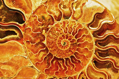 Ammonite Section, Rome Mineral Show (Claudio_R_1973) Tags: spiral abstract fossile ammonite mineral vivid geometric detail colorful ancient rome expo show mineralshow