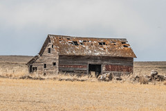 Abandoned in the field (Diggerthedog99) Tags: faded wood daysgoneby memories old building abandoned