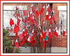 Festive Stocking Tree (bigbrowneyez) Tags: socks stockings tree branches festive fun santaclaus merrychristmas natale noel feliznavidad holidays precious clever decorative delightful lights colourful fancy creative sweet bello sockcollection albero calze outdoors babbo candycanes treasures greenwhite red rosso bellissimo festa priceless striking stunning amazing smart artful ottawa