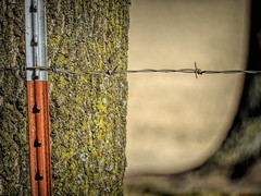 Twist With A Point (clarkcg photography) Tags: fence tpost metalpost red white barbedwire point twist fencedfriday