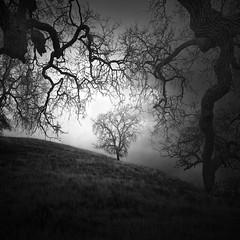Tendrils (nlwirth) Tags: blackandwhite nlwirth yup infrared oak tree light clouds novato california landscape grass hill
