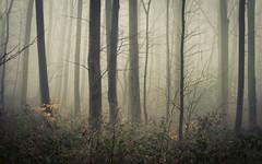 Thicket (Netsrak) Tags: baum bäume eu eifel europa europe forst landschaft natur nebel rheinland rhineland wald fog forest landscape mist nature outdoor trees winter woods