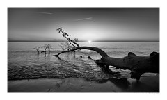 sunset at the west beach (herbert thomas hesse) Tags: hth sw b w black white sunset monochrome baltic sea bw water wave sun