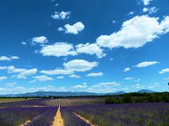 P1120877 (alainazer) Tags: valensole provence france fiori fleurs flowers fields champs ciel cielo sky colori colors couleurs lavande lavanda lavender