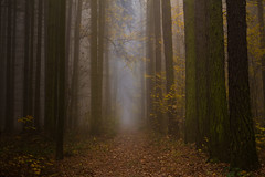Days of not peace (Petr Sýkora) Tags: les mlha podzim forest trees fog autumn czech