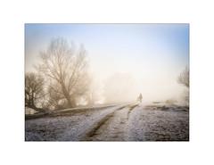 On a misty Day at the Lake (My digital Gallery) Tags: lakeofconstance hard austria europe eu fog misty foggy nebelig nebel bäume