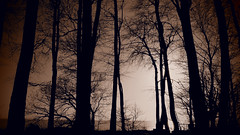 Trees on the Baltic Sea (Ostseetroll) Tags: geo:lat=5412670236 geo:lon=1093514031 geotagged deu deutschland grömitz kagelbusch schleswigholstein ostseeküste balticseacoast bäume trees olympus em10markii