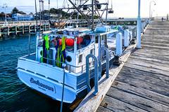 Endeavour San Remo (John Hewitt 7) Tags: luminosity7 nikond850 phillipisland sanremo victoria australia pier fishingboat trawler sunsetshot hivis colour fishandchips