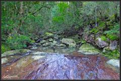 Flat Rock 1 (itsallgoodamanda) Tags: amandarainphotography australia australianphotography australianlandscape australianbush kangaroovalley water creek bush trees rocks belmorefalls shoalhaven photography photoborder itsallgoodamanda digitalpainting jervisbayphotography jervisbay scenery