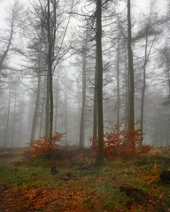 M i s t y... (L.H.IMAGES) Tags: tree trees mist weather fog winter outdoor forest wood woodland atmospheric colours orange treetrunk