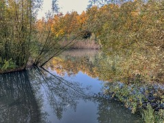 Wemmel-Beverbos-Reflection-03 (foto_morgana) Tags: arbre arbres aurorahdr2019 autumn herfst belgique belgium belgië beverbos boom bomen iphonexsmax nature natuur naturereserve natuurreservaat on1photoraw2020 reflection reflectie weerspiegeling tree trees water eau wemmel