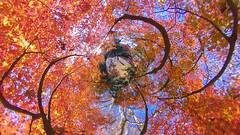 紅葉 (ajpscs) Tags: ©ajpscs ajpscs 2019 japan nippon 日本 東京 tokyo tokyostreetphotography streetphotography insta360onex 360度カメラ 360°camera 360streetphotography lifein360 tokyo360 tinyplanet shinjuku 新宿 shinjukugyoennationalgarden 新宿御苑 autumn leaves aki 秋 momiji mapleleaves 紅葉 foliage autumnsky