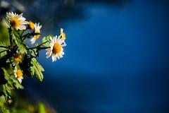 After the Rain at Nicosia (2) (Polis Poliviou) Tags: nicosia lefkosia street summer capital life live floral flower flowers winter polispoliviou polis poliviou πολυσ πολυβιου cyprus cyprustheallyearroundisland cyprusinyourheart yearroundisland zypern republicofcyprus κύπροσ cipro кипър chypre chipir chipre кіпр kipras ciprus cypr кипар cypern kypr ©polispoliviou2019 streetphotos europe building streetphotography urbanphotography urban heritage people mediterranean roads architecture buildings 2019 city town travel naturephotography naturephotos urbanphotos neighborhood rain