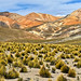 CHILE - Atacama Desert - Road to Colchane (1066)
