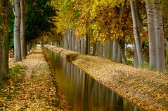 LOS ESPEJOS DEL OTOÑO (marthinotf) Tags: otoño canal reflejos coloresdeotononogal alamos arboles agua caminosdeotoño paseos caminos hojas hojasdeotoño paisaje canalderiego