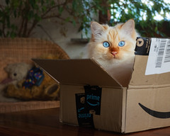 Prime Delivery ! (FocusPocus Photography) Tags: tofu dragon karton cardboardbox tier animal lieferung delivery katze kater cat