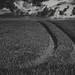 Trail (II)