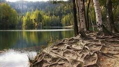 *** (pszcz9) Tags: przyroda nature natura naturaleza woda water staw pond drzewo tree korzeń root odbicie reflection jesień autumn pejzaż landscape beautifulearth sony a77