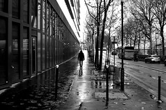 Autumn rain (pascalcolin1) Tags: paris13 homme man rue street pluie rain reflets reflection arbres trees photoderue streetview urbanarte noiretblanc blackandwhite photopascalcolin 50mm canon50mm canon