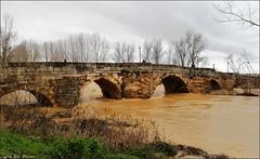 Puente Canto - Puente romano sobre el Cea (Luisa Gila Merino) Tags: río inundación sahagún castillayleón agua puente borrasca puenteromano arboleda otoño puentecanto riada