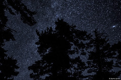 So Many Stars (M@rtha Decker) Tags: starry sky night dark dense esther lake hovland minnesota minn mn grand portage state forest canadian border woods trees oldgrowth old growth pines nature outdoors outside camp camping astronomy pentax ks2 dslr asahi takumar 128mm lens m42 marthadecker onlyinmn upnorth justpentax
