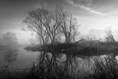 island trees (Hans Zitzler) Tags: island river naab bavaria morning winter mist trees water sunrise oberpfalz bubach