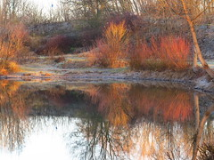morning tones (germancute ***) Tags: nature outdoor landscape landschaft thuringia thüringen germany germancute deutschland lake see