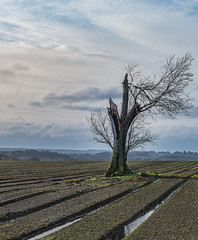 In the groove. (Martyn.A.Smith LRPS) Tags: outdoors field groove tree tracks clouds landscape colour winter warwickshire fujifilm xt3