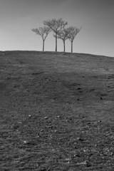 En clave de cuatro (jssgarca) Tags: landscape nature lonely perspective composition armony contrasts bw paisaje perspectiva soledad tranquilidad contrastes monocromo