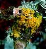 lichen colour