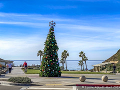 IMG_3970-Edit (Laurie2123) Tags: christmas2019 christmastree fletchercove laurieabbotthartphotography laurieturner laurieturnerphotography laurietakespics odc odc2019 ourdailychallenge solanabeach beach laurie2123