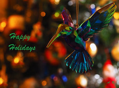 Happy Holidays  - Vancouver, British Columbia (Barra1man (Very Busy)) Tags: happyholidays merrychristmas decoration christmasornament ornament christmastree christmas tree hummingbird vancouver britishcolumbia canada olympus olympusem1 iso2500 lens50mm f56150 macro