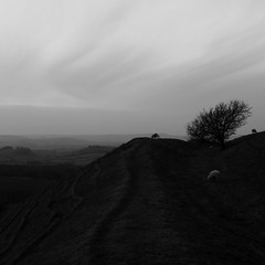 Winters Day on Eggardon Hll (M.T.A.V) Tags: hill westdorset dorset hillfort ramparts ancient tree sheep grass winter wind blustery cold blackandwhite blackwhite black white monochrome marshwoodvale eggardonhill ironagehillfort weather windy sky clouds bw lonely lonelytree canon canoneos750d canon750d cloud efs1855mm england englishcountryside countryside agriculture animals windswept