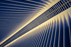 spine (onefivefour) Tags: nyc newyork spine cold architecture oculus building blue yellow wtc
