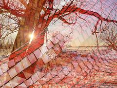 Folie en rose (Amiela40) Tags: arbre tree tuile carré folie beauté