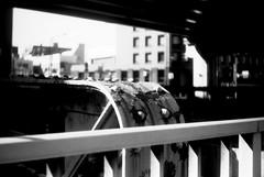 芽吹き (Sprouting) (Dinasty_Oomae) Tags: argusc3 argus アーガス アーガスc3 白黒写真 白黒 monochrome blackandwhite blackwhite bw outdoor 東京都 東京 tokyo street 千代田区 chiyodaku