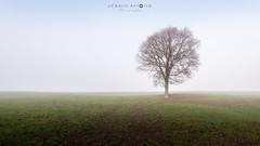 Seul au monde [in Explore] (cedant1) Tags: dinant namur belgium belgique belgië hasti hastière falm falmignoul wallonie wallonia fog foggy mist weather trees minimalist nikon nikond750 afs1635f4
