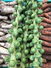 (akerrzz) Tags: healthy earthy soil brusselsprouts nutrition festive codown banbridge greengrocers food christmas tricolor parsnips carrots green vegetables